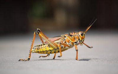 Insecten fobie