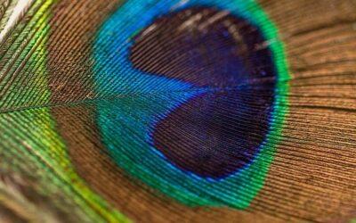 Hypnose een openbaring en oplossing van een probleem
